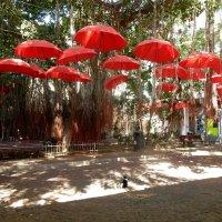 Среди ярких зонтов. :: ТаБу