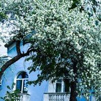 Старая яблоня :: Ирина АЛЕКСАндрович