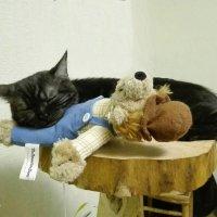 Собака - друг кошки... :: Тамара Бедай