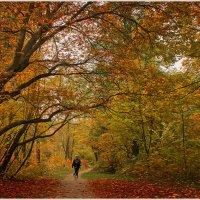 Сокольники, октябрь :: Pepsovich