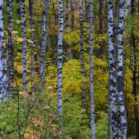 Осень в лесу :: Вадим *