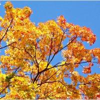 Золотая осень. :: Валерия Комова