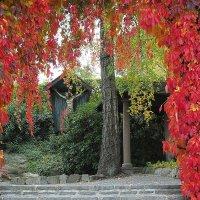 Портал в осень :: Swetlana V
