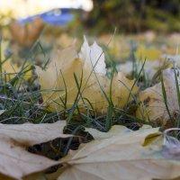 Листья в траве... :: ТатьянА А...
