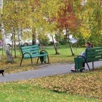 Осень в перке :: Елена Лапина