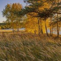 осень у озера :: Владимир Ефимов