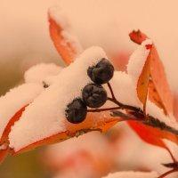первый снежок :: леонид логинов