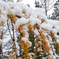 Первый снег :: Вера