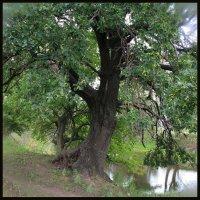 Красивые деревья. :: Юрий ГУКОВЪ