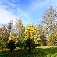 Осенний пейзаж :: Елена