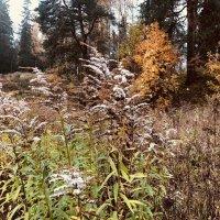 В полях осенью :: Ксения Черных