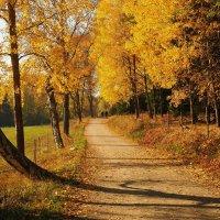 Национальный парк-резерват Тюреста Швеция :: Swetlana V