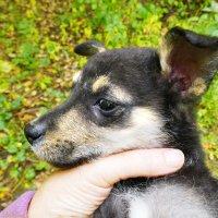 Новая жизнь начинается у меня с новой собаки... :: Ekaterina Bertin