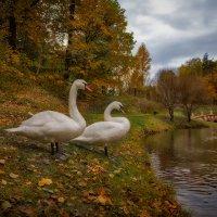 На пруду :: Дмитрий Motorin