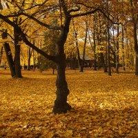 Осень :: Вовик Пупкин