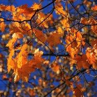 Кленовый лист багряной птицей, по воле ветра летит ввысь..... :: Tatiana Markova