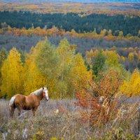 Осенний пейзаж с лошадью :: Галина