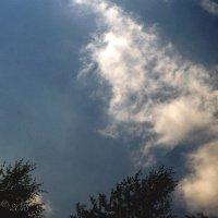 Образ в вечернем небе. :: Елена Kазак