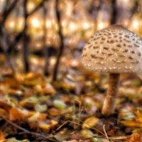 Про грибок в осеннем ахромате :: Андрей Селиванов
