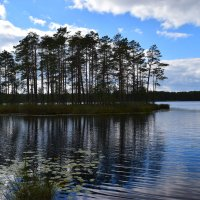 Лесное озеро :: Вадим *