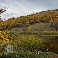 Золотая осень :: Андрей ЕВСЕЕВ