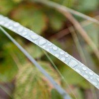 Капли на травинке после дождя :: Екатерина Тихомирова
