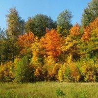 Золотая осень :: татьяна