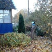 Осень в деревеньке :: BoxerMak Mak