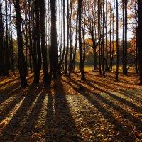 Вот, и наступает время прозрачного леса :: Андрей Лукьянов