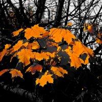 Осень :: Леонид leo