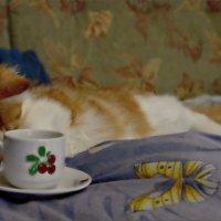 Нет больше удовольствия, чем когда когда в пузе продовольствие... :: Кай-8 (Ярослав) Забелин