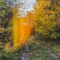 Осенний завиток.. :: Юрий Стародубцев