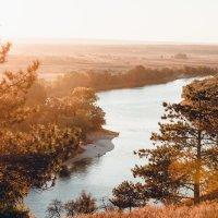 Золотая осень :: Ольга сташевски