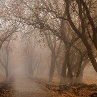 По пустынной и голой аллее... :: Вера Сафонова