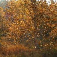 Осенний пожар полыхает в лесу :: Swetlana V