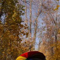 радужная осень :: Ольга (Кошкотень) Медведева