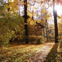 Осенняя позолота . :: Татьяна