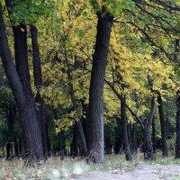 Осенний лес :: Татьяна Ларионова