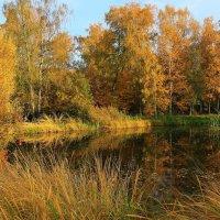 Осень в Ботаническом. :: Николай Кондаков
