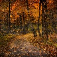 Тайна леса :: Дмитрий Motorin
