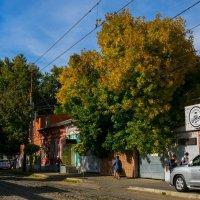 Осень в городе :: Ц А П А .