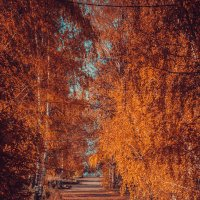 Огненная осень) :: Макс Беккер