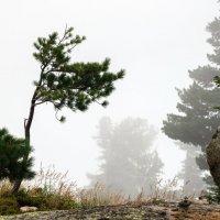 Туман в антураже :: Ник Васильев