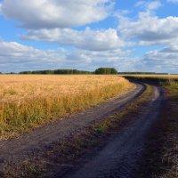 Полевая  дорога :: Геннадий С.