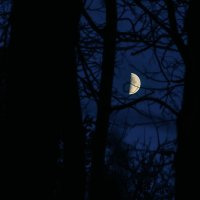 Цвет ночи :: Олег Архипов