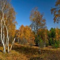 img_8140 :: Сергей Козлов
