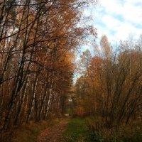 Царит осенний лист в природе, аллеи в праздничном наряде,  берёзы – словно на параде :: Елена Павлова (Смолова)