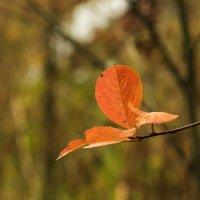 Октябрьские листья :: Aнна Зарубина