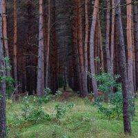лес :: Ustas FritZZZ