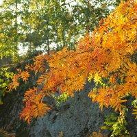 Осенний лес :: Swetlana V